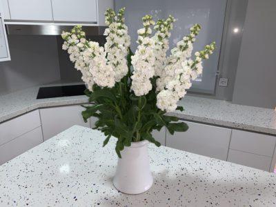 Ramos de flores y peluches