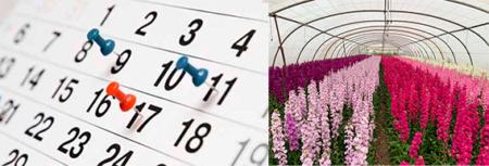 Consejos para cuidar tus ramos de flores