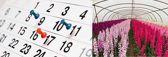 Calendario flor de temporada